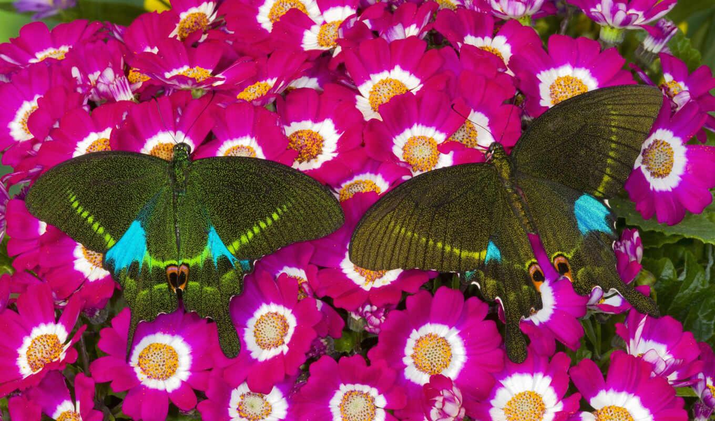 бабочки, классные, flowers, от, цветах, файла, мб, отличное, песни, качество, бабочка,