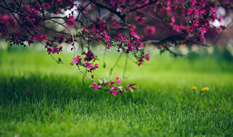 priroda, vesna, cvety, трава, leto,