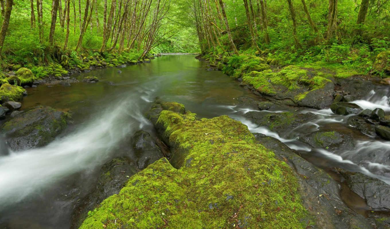 река, oregon, rivers, nestucca, природа,