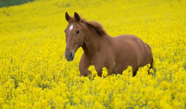 лошади, zhivotnye, лошадь, кони,