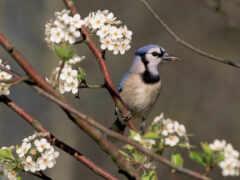 blue, джей, цветы