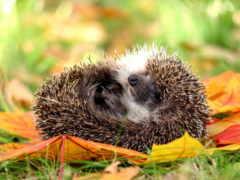 осень, животные, любят