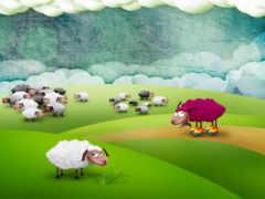 sheep, роликах, овцы