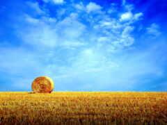 природа, поле, небо