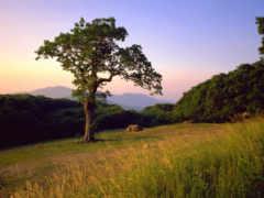 дерево, поляне, леса