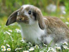 easter, зайцев, животных