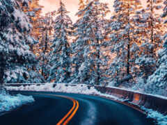 дорога, лес, winter