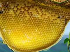 пчелка, соты