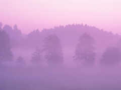туман, презентация, розовый