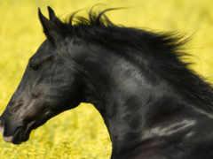 лошадь, животных, яndex