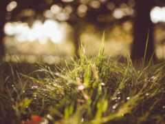 трава, дождь, роса