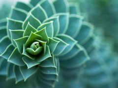макро, природа, растение
