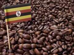 coffee, kenya, bean