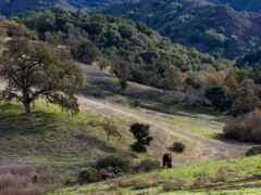 shrubland, wikipediashrubland, миссия