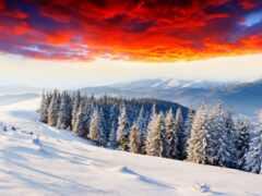 winter, заснеженный, лес