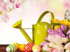 яйцо, бабочка, цветы