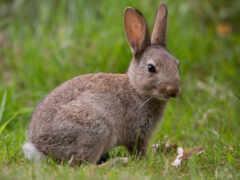 кролик, bunny, baby