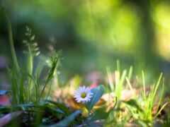 трава, украины, яndex