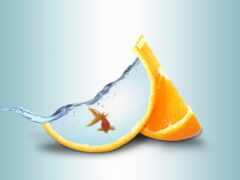 fish, золотистый, оранжевый