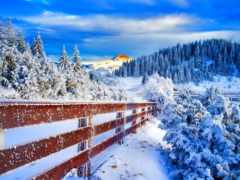 winter, кар, durumu