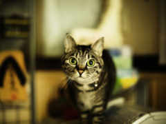 домашний кот,
