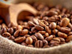 coffee, java, seed
