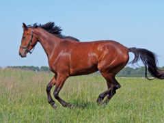 лошадь, zhivotnye, run