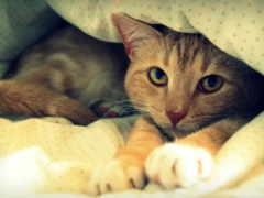 кот, девушка, кровать