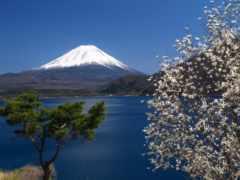 japanese, гора, фудзияма