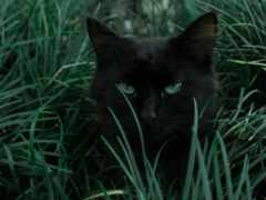 кот, black, nachinauschaya