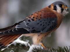 branch, птица, winter