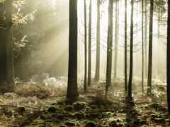 pantalla, ipad, лес
