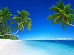 пальмы, тропическая зона, природа