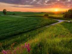 закат, поле, трава