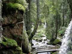 леса, поверхности, часть