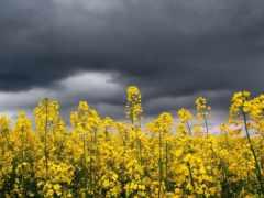 cvety, желтые, полевые Фон № 170869 разрешение 2560x1600