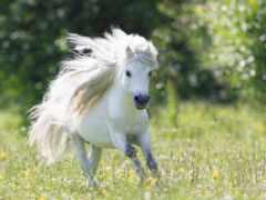 white, лошадь, пони