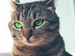 ipad, мини, кот