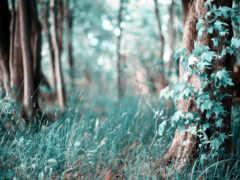 лес, трава, густой