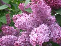 май, календарь, цветы