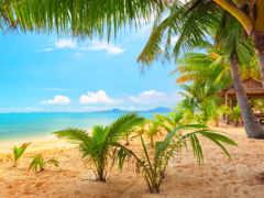 пальмы, пляж, природа Фон № 108119 разрешение 2560x1600