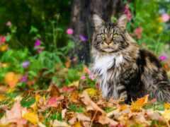 осень, листва, кот