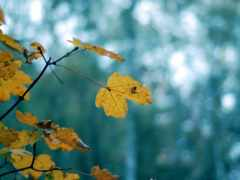 листья, фон, downloads