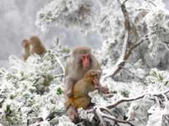 winter, снег, япония