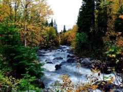 река, mobile, widescreen