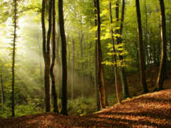лес, лиственный, яndex