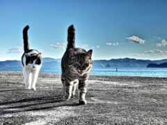 коты, два, кот