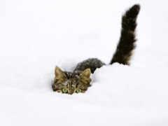 кошки, коты, кот