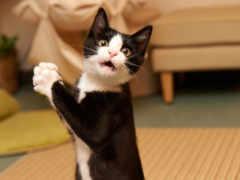 кот, удивлен, коты
