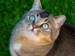 кот, глаз, смотреть